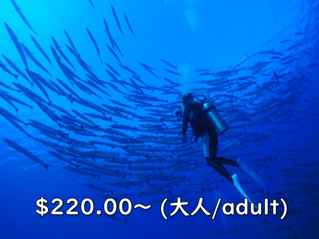 外洋体験ダイビング アイキャッチ画像